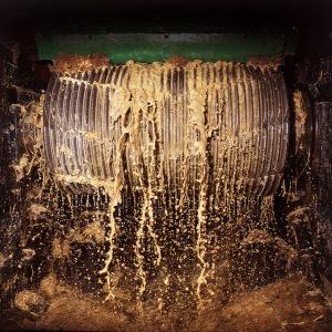 Martinique. Machine vapeur de la distillerie Dillon Fort-de-France. Ecoulement du jus lors du broyage de la canne par les rolles du moulin.